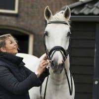 Yteke paard 2